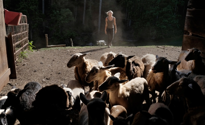 Photographer Rob Amberg. June 2, 2014. Kelsey Green herding sheep to the barn, Paw Paw, Madison County, North Carolina